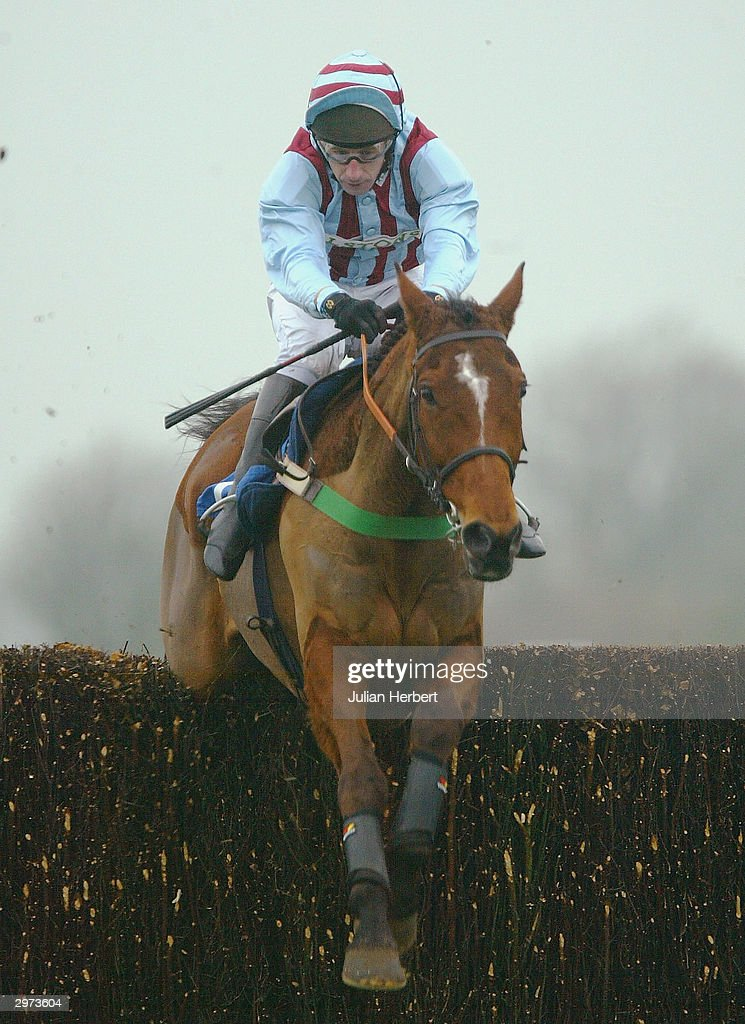 Edredon English.Jim Culloty And Edredon Bleu Clear The Second Last Fence Before