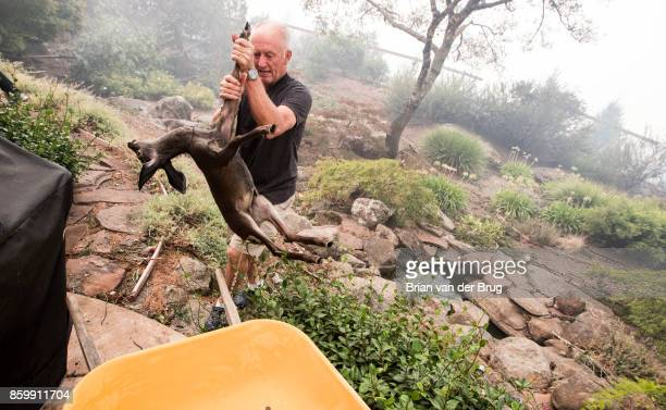 Jim Hanks removes a fawn he found in the backyard pond of his Fountaingrove home one of the only homes on the block that survived the Monday morning...