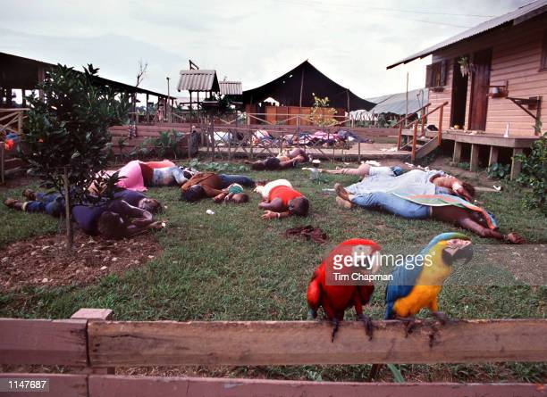 Jim Jones leader of the People's Temple Cult massacred 912 people in a mass suicide in the jungle of Guyana spared only these two Macaws in Jonestown...