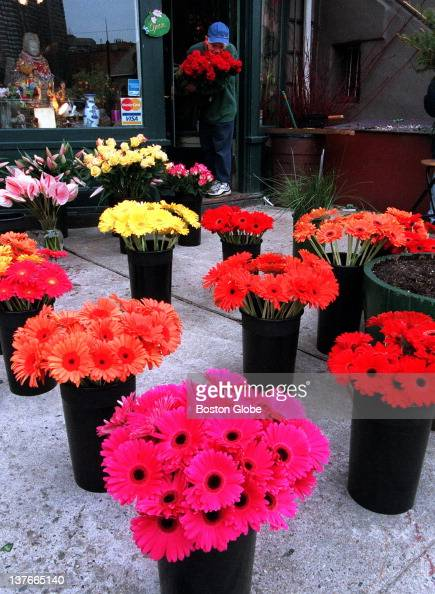 Valentines Day Flowers Pictures Getty Images