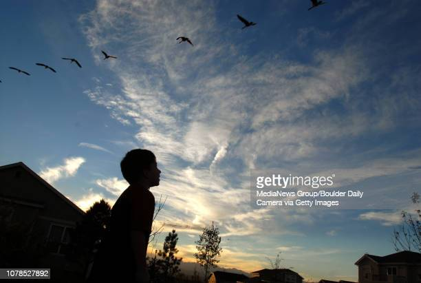 Jimmy Sines watches Canada Geese fly over his home in Wildgrass on Tuesday