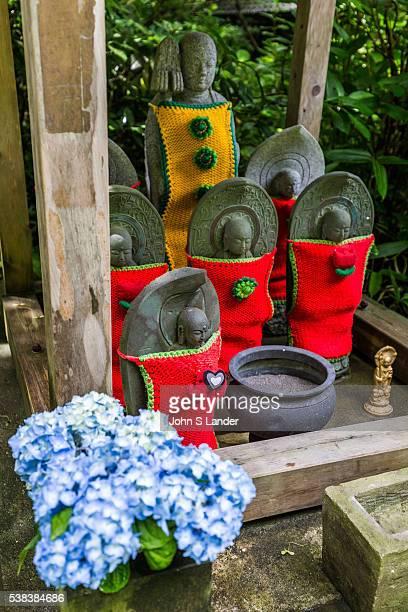 Jizo Bodhisatva and Hydrangea at Meigetsuin Meigetsuin also known as Ajisaidera or Hydrangea Temple since many Hime Ajisai Princess Hydrangea are...