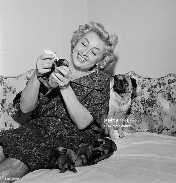 Joan Blondell with puppies at home for PERSON TO PERSON Image dated March 31 1959