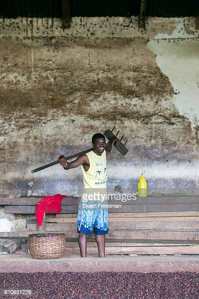 Joao Lopez Tavez 31 who works at the Roca Boa Vista sorting and raking cocoa beans Sao Tome The cacao plant was taken from Brazil to Principe and Sao...