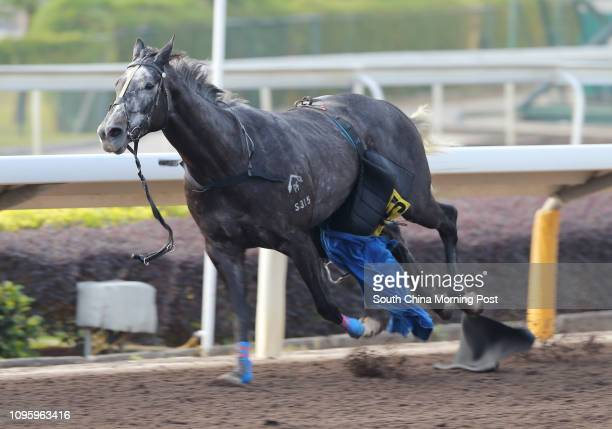 Jockey Alex Lai Hoiwing was dislodged and GOOD CHOI LEE ran away without rider in the barrier trial at Sha Tin 29DEC15