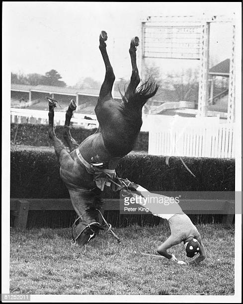Jockey C Norman falling from 'No Thanks' aptly numbered 13 during the Falcon Handicap Steeple Chase at Ascot where the N H meeting is taking place...
