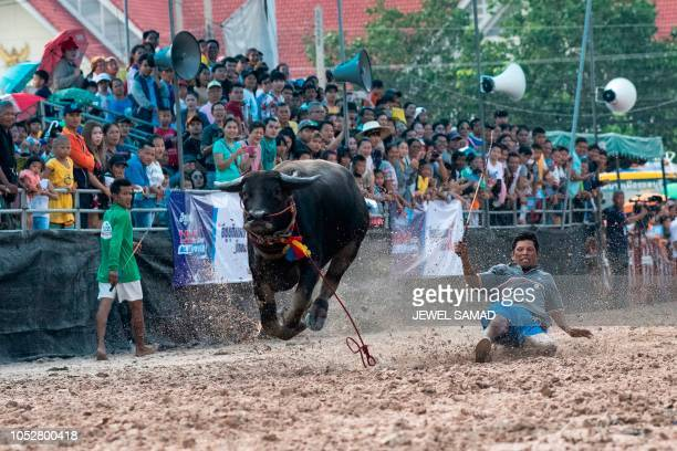 A jockey falls off a buffalo during the annual buffalo races in Chon Buri on October 23 2018 Several hefty buffaloes thunder down a dirt track in...