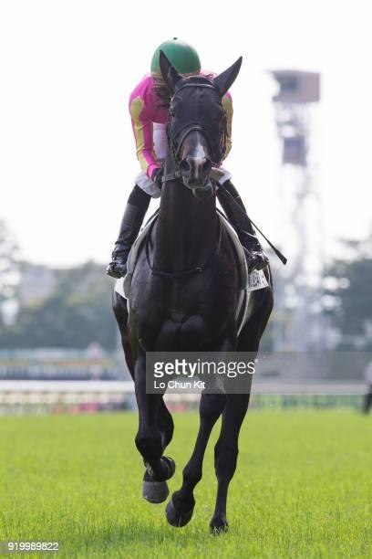 Jockey Hideaki Miyuki riding T M Inazuma during the Tokyo Yushun at Tokyo Racecourse on May 26 2013 in Tokyo Japan Tokyo Yushun Japanese Derby is the...