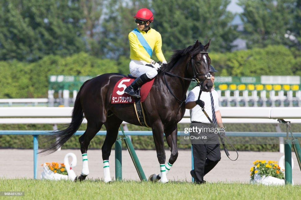 Kyoto Shimbun Hai (G2 2200m) at Kyoto Racecourse : News Photo