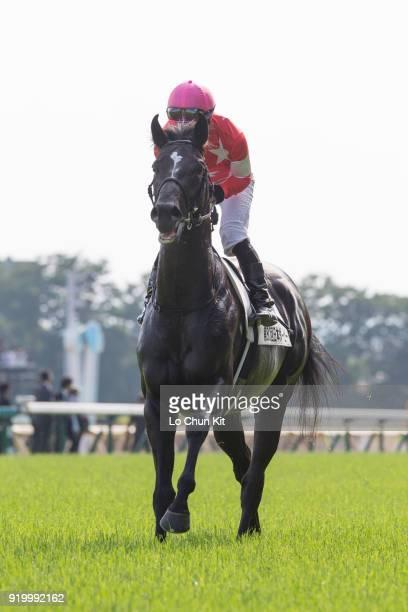 Jockey Hiroyuki Uchida riding Red Raven during the Tokyo Yushun at Tokyo Racecourse on May 26 2013 in Tokyo Japan Tokyo Yushun Japanese Derby is the...