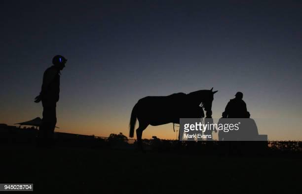 Jockey Hugh Bowman inspects Winx after a trackwork session at Rosehill Gardens on April 12 2018 in Sydney Australia