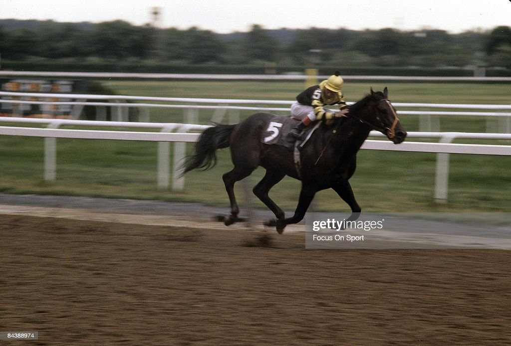 Ancient Egypt - Teacher Oz Seattle slew photo gallery