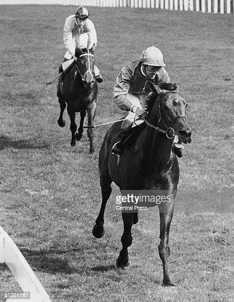 Jockey Joe Mercer riding Brigadier Gerard to victory in the Queen Elizabeth II stakes at Ascot, 23rd September 1972. The horse behind the winner is...