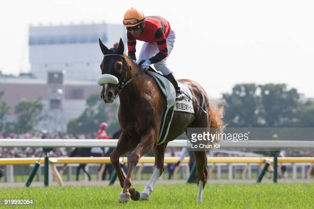 Jockey Keita Tosaki riding Action Star during the Tokyo Yushun at Tokyo Racecourse on May 26 2013 in Tokyo Japan Tokyo Yushun Japanese Derby is the...