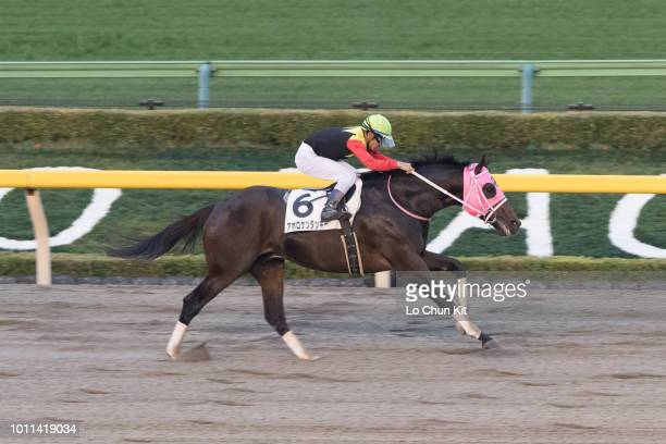 Jockey Keita Tosaki riding Apollo Kentucky wins the Race 12 at Tokyo Racecourse on November 7 2015 in Tokyo Japan