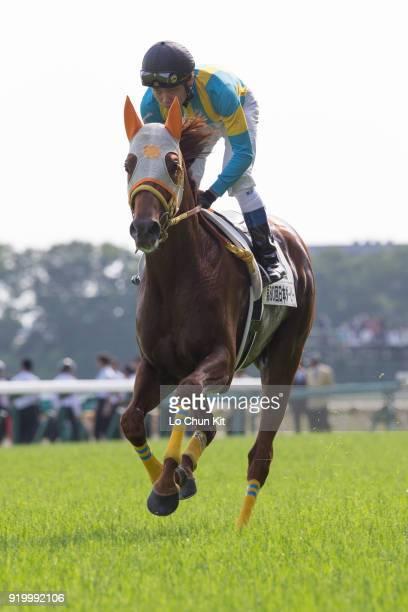 Jockey Kosei Miura riding Crown Regalo during the Tokyo Yushun at Tokyo Racecourse on May 26 2013 in Tokyo Japan Tokyo Yushun Japanese Derby is the...