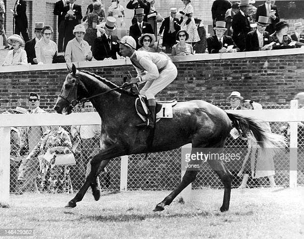 Jockey Lester Piggott on Right Boy at Ascot June 1959