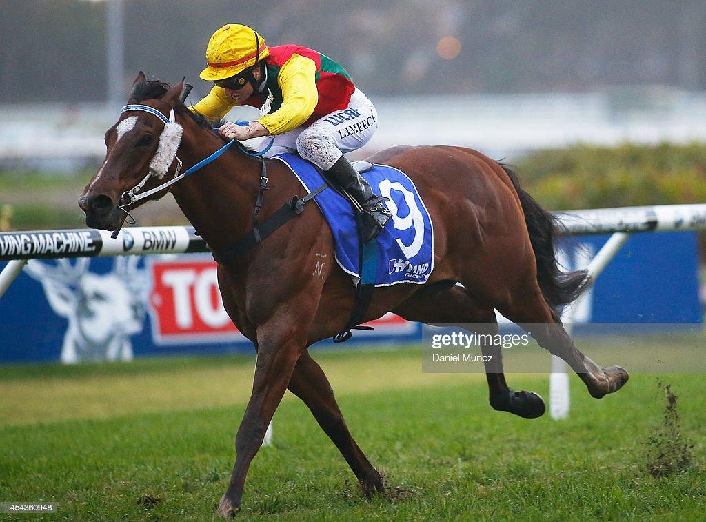 Jockey Linda Meech rides Weinholt to win Race 8 'Hyland Race Colours Handicap' during Sydney Racing at Rosehill Gardens on August 30, 2014 in Sydney, Australia.