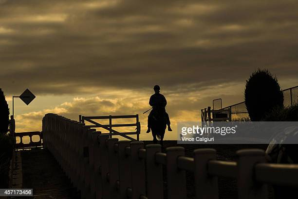 Jockey Mark Zahra riding Savage Coup after a trackwork session at Caulfield Racecourse on October 14 2014 in Melbourne Australia