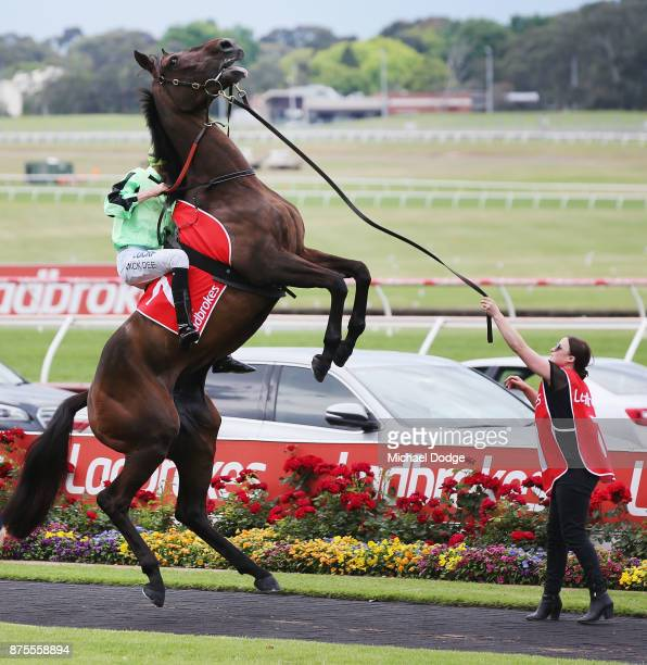 Jockey Mick Dee holds on as Consommateur rears the in the mounting yard before Race 7 the Quatclean Zipping Classic during Melbourne Racing at...