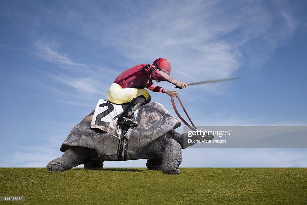 Jockey over a turtle : Bildbanksbilder