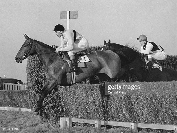Jockey Pat Taaffe and Arkle lead D Nicholson on Mill House on the first circuit of the Gallagher Gold Cup at Sandown Park Surrey 6th November 1965...
