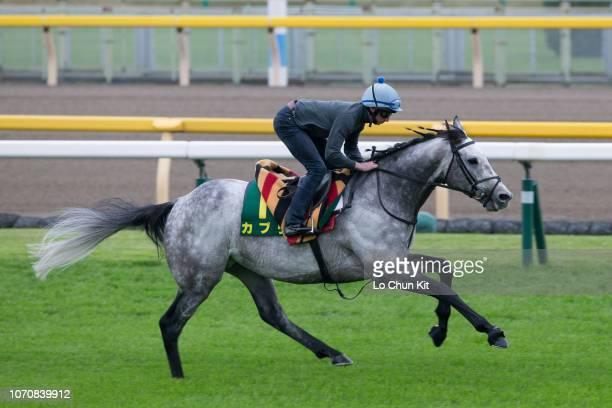 Jockey Ryan Moore riding Capri prepare for Japan Cup at Tokyo Racecourse on November 22, 2018 in Fuchu, Tokyo, Japan.