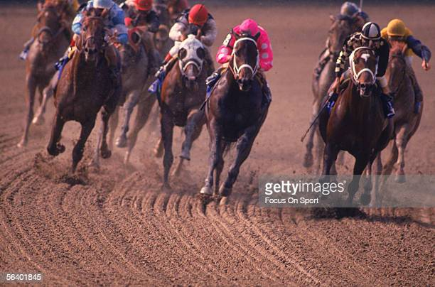 Jockey Steve Cauthen rides on Affirmed who takes the lead against jockey Jorge Velasquez and Alydar during the Belmont Stakes to win the Triple Crown...