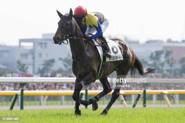 Jockey Yuga Kawada riding Lovely Day during the Tokyo Yushun at Tokyo Racecourse on May 26 2013 in Tokyo Japan Tokyo Yushun Japanese Derby is the...
