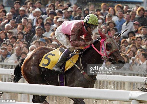 Jockey Yutaka Take riding Haruurara competes in the race at the Kochi Racecourse on March 22 2004 in Kochi Japan