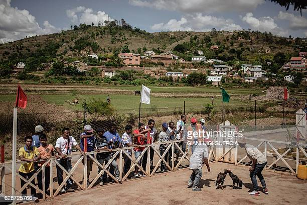 Jockeys and owners spur their roosters with water and shouting during a Cock fighting tournament on December 3, 2016 on the outskirts of...