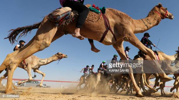 TOPSHOT Jockeys race during the Sheikh Sultan Bin Zayed alNahyan camel festival at the Shweihan racecourse in alAin on the outskirts of Abu Dhabi on...