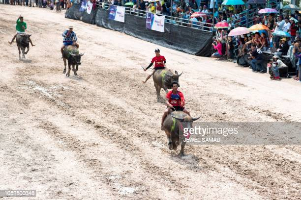 Jockeys ride buffaloes during the annual buffalo races in Chon Buri on October 23 2018 Several hefty buffaloes thunder down a dirt track in eastern...