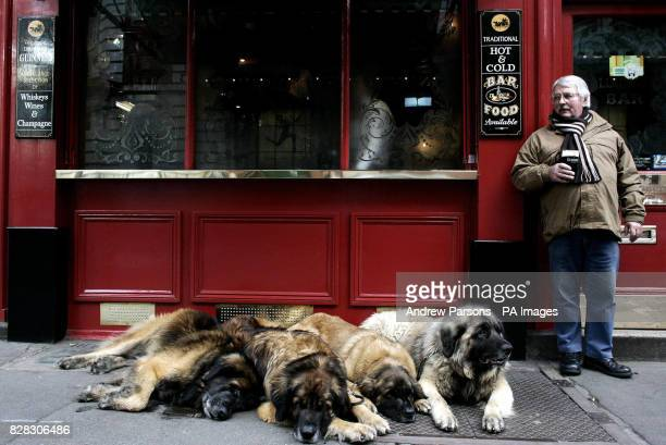 Joe Rothery from Chelmsford Essex takes his Leonberger Lion Dogs Remondo 9 Morgan 5 Josie 9 months Arran 5 out for a walk and stops for a pint in...