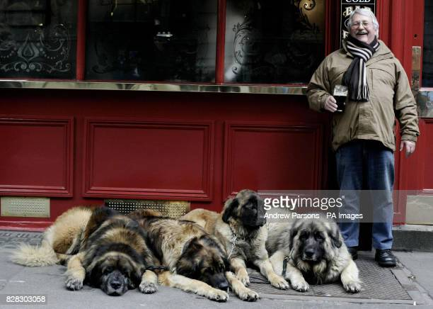 Joe Rothery From Chelmsford in Essex enjoys a pint in central London after taking his Leonberger Lion Dogs Remondo Morgan Josie and Arran out for a...