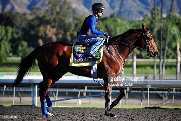 Joe Steiner rides Lookin At Lucky during a morning workout in preparation for the Breeders Cup 2009 at the Santa Anita Racetrack on November 2 2009...