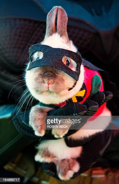Joey a dwarf Siamese rabbit is dressed as Batman's sidekick Robin at a Halloween dog costume parade and contest in Long Beach California October 28...