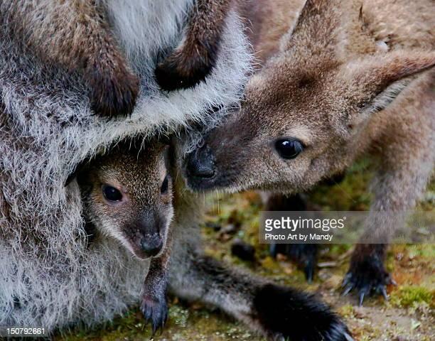 Joey with kangaroo