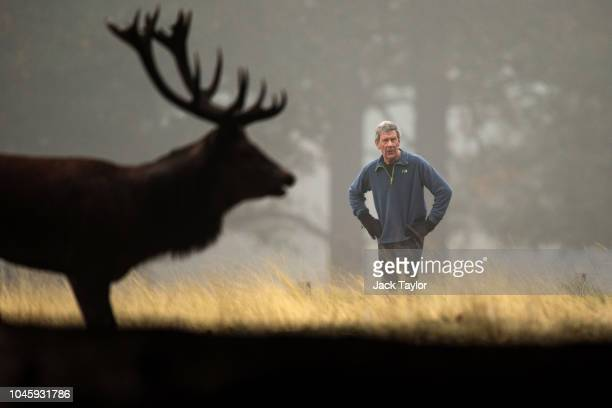 A jogger pauses to allow a red deer stag to pass on a foggy morning in Richmond Park on October 5 2018 in London England The months of Autumn are...