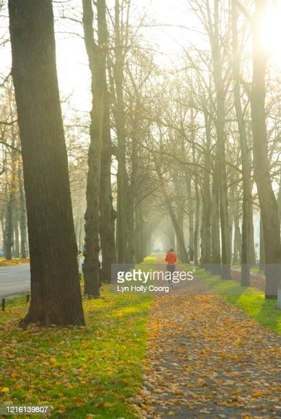 jogger running on a path in a sunlit park - lyn holly coorg stock pictures, royalty-free photos & images