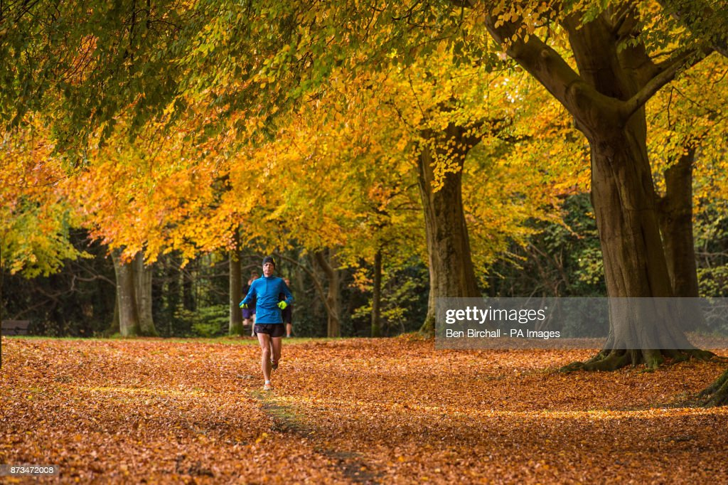 A jogger runs under deciduous trees in Clifton, Bristol.
