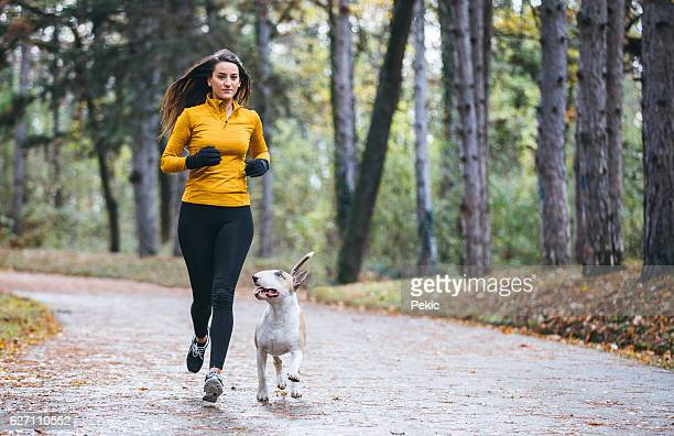 jogging in the morning with the dog - bull terrier stock photos and pictures