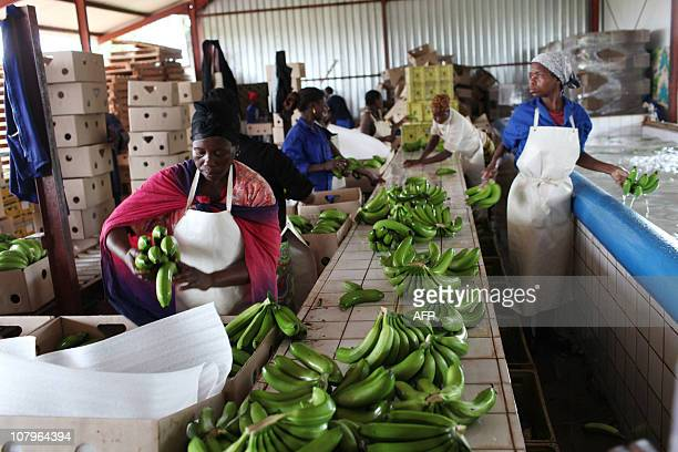 Johannes MyburghMozambican workers pack bananas in boxes at the Tropical Frutos farm on November 29 2010 African Frutos is a company based in...
