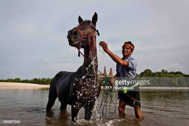 Johannes Ndara Kepala washes his horse before being decorated for The Pasola on March 4 2013 in Sumba Island East Nusa Tenggara Indonesia Sandalwood...