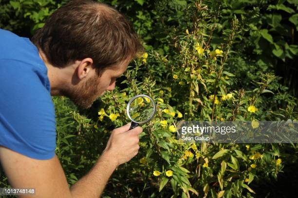 Johannes Russmann from NABU Germany's biggest NGO for conservation and the study of nature inspects an urban garden for insects while participating...