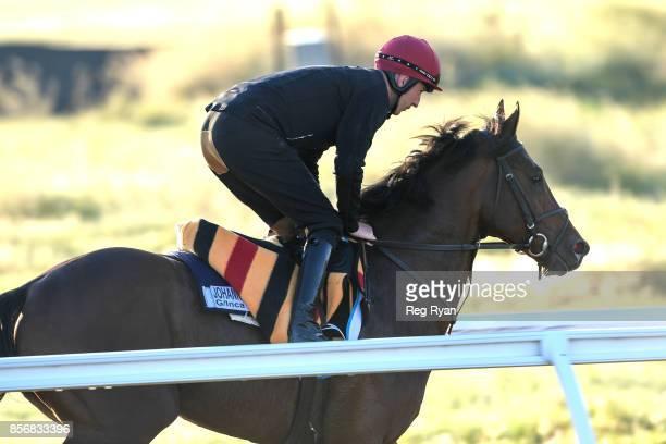 Johannes Vermeer at Werribee Racecourse on October 03 2017 in Werribee Australia