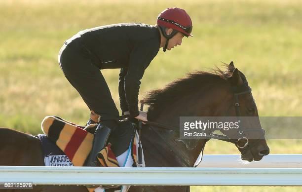 Johannes Vermeer during trackwork at Werribee Racecourse on October 17 2017 in Werribee Australia