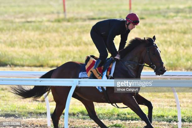 Johannes Vermeer gallops during a trackwork session at Werribee Racecourse on October 17 2017 in Melbourne Australia