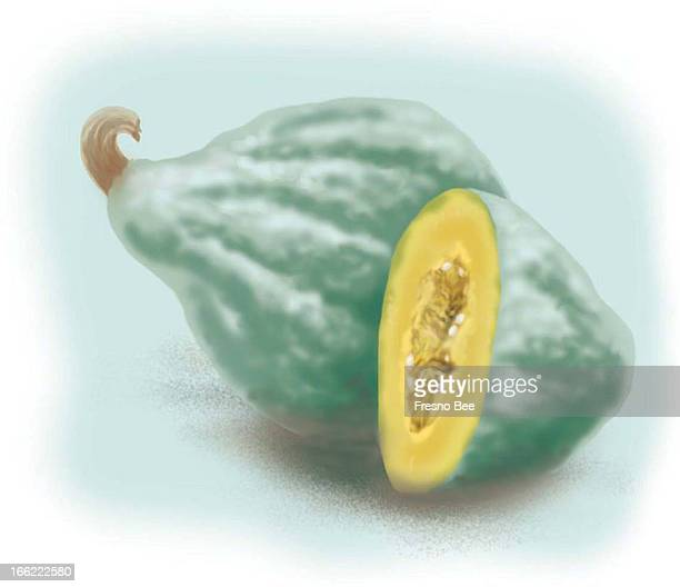 John Alvin color illustration of Hubbard squash