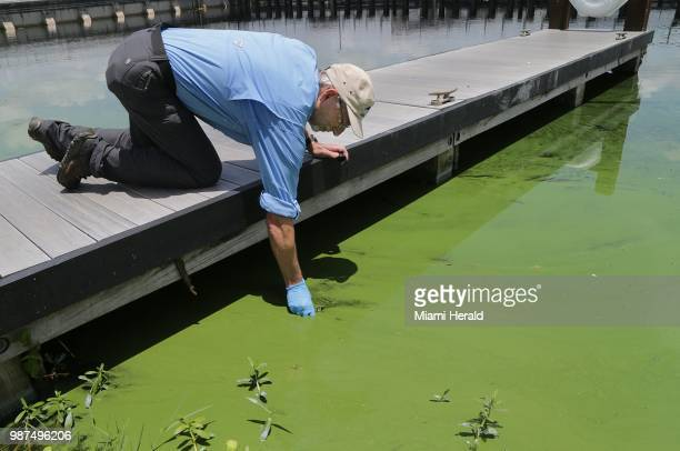John Cassani Director at Calusa Waterkeeper takes a water sample at WP Franklin Lock and Dam park where a deepening algae bloom could be seen along...